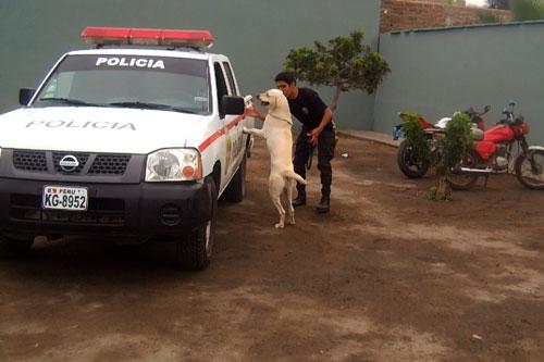 mascota-de-la-brigada-canina-de-seguridad-ciudadana-de-trujillo-participa-en-curso-antidrogas-2