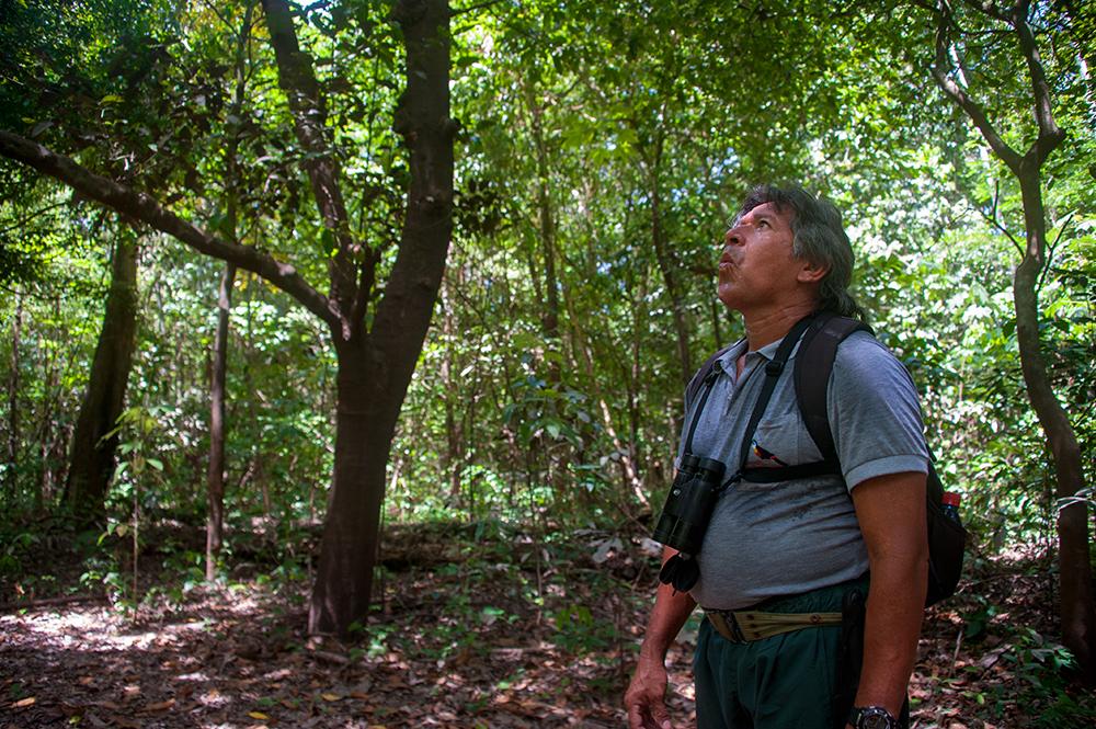 Amazonas, Brasil, jungel, reise