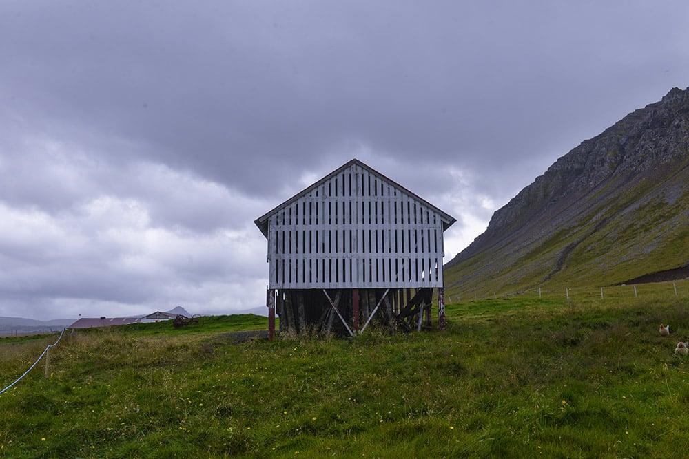 Bjarnarhófn, hákarl, Island