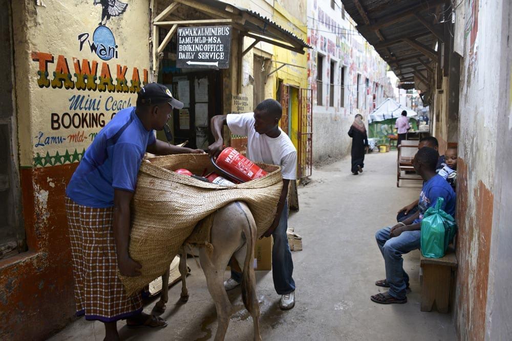 Esel lastes opp på Lamu