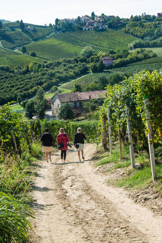 Kjerrevei mellom Barolo og La Morra i Piemonte