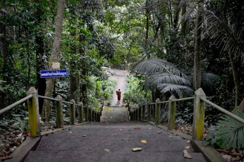 Trapp i skogklosteret Wat Marp Jan i Thailand