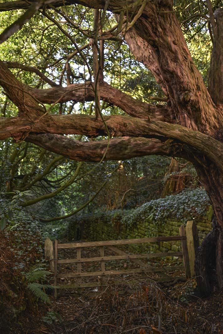 Grind på en hulvei i Somerset