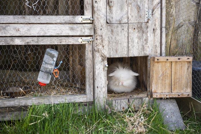 kanin i bur på bondegård