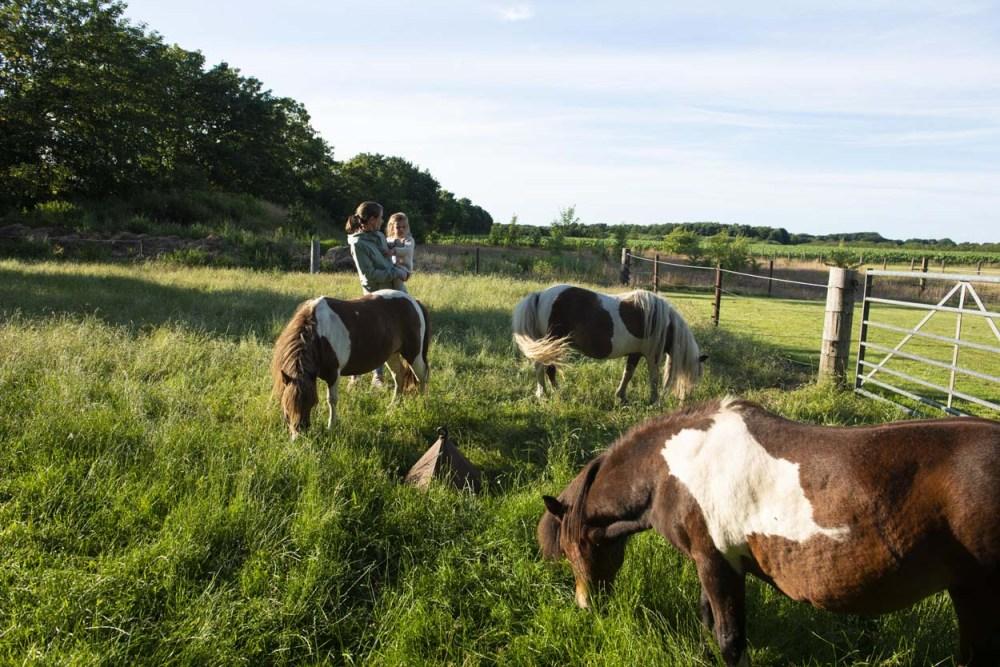 barn og ponnier på en stor eng i Danmark