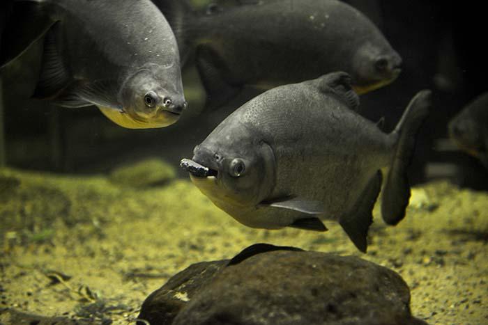 Fisker i Akvariet i Bergen