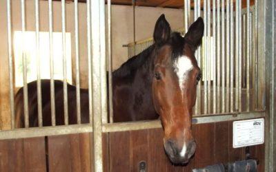 ألمانيا : مجهول يتسبب بنفوق حصان بعد اعتد. ائه عليه بوحشية !