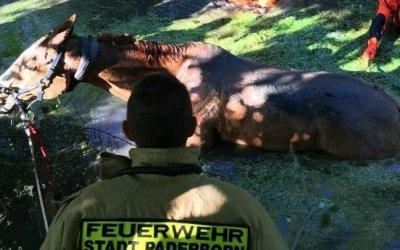 ألمانيا : عملية غير اعتيادية للإطفاء من أجل إنقاذ حصان في هذه المدينة ! ( صور )