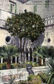 Dubrovnik-Ragusa, Arancio nel Chipstro Francescani