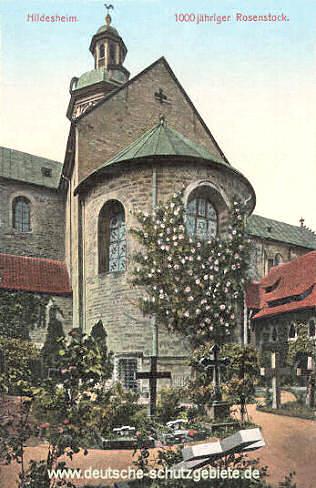 Hildesheim, 1000 jähriger Rosenstock