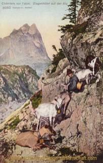 Chèvres sur l'alpe, Ziegenhüter auf der Alp