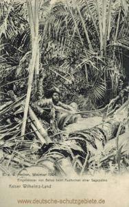 Kaiser Wilhelms-Land, Eingeborener von Beliao beim Aushacken einer Sagopalme