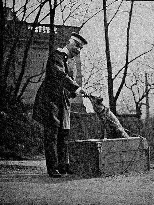 Graf Waldersee füttert seinen selbstgezähmten Fuchs.