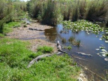 Everglades - Anhinga Trail