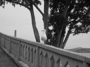 Alcatraz extérieur