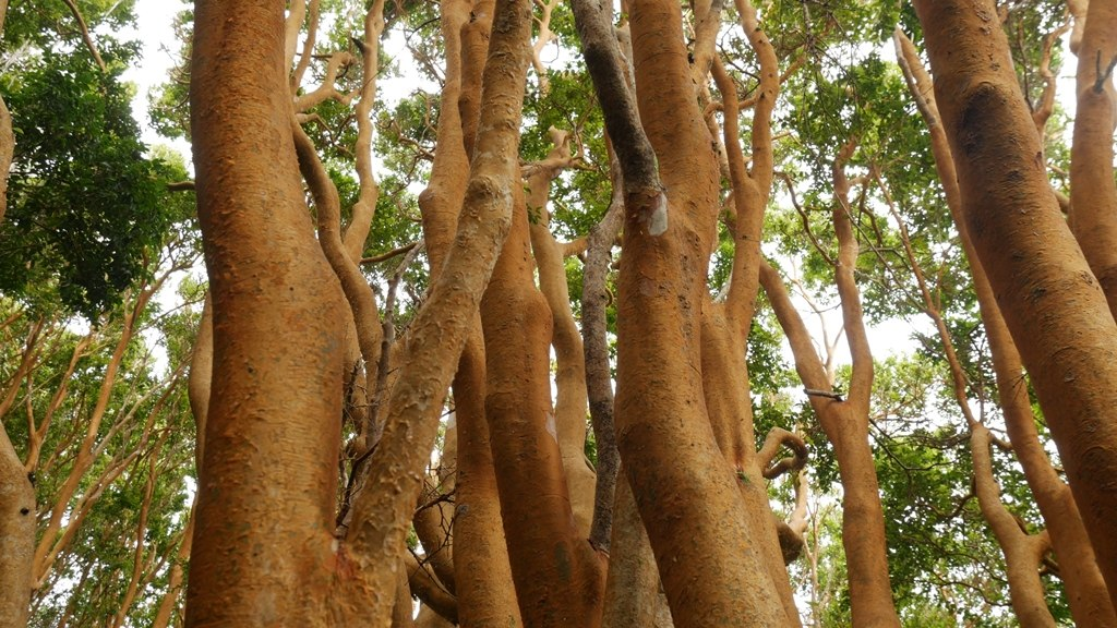 Forêt Parc National Chiloé