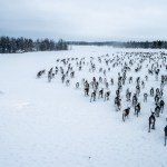 Fighting for Free-Range Reindeer in Norway's Far North