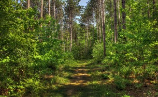 indiancountryforest.jpg