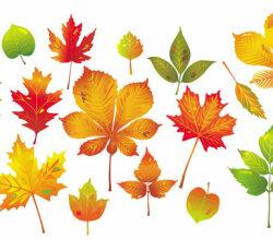 Autumn Leaf Collection