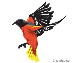 Free Oriole Bird Vector