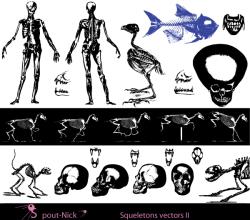 Vector Skeleton Clip Art
