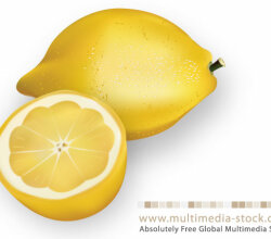 Vector Lemons
