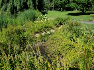 Storm water flows into the rain garden from the north.