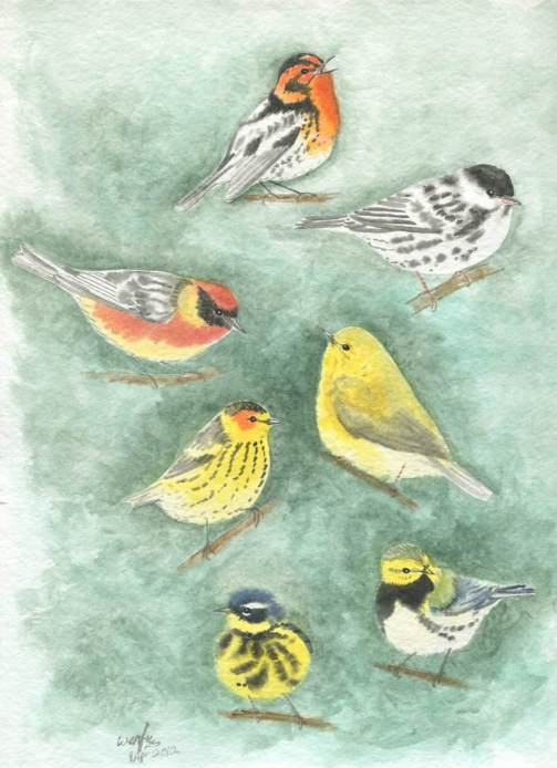 Setophaga Warblers Evergreen by Wenfei Tong