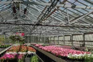Interior view of greenhouse, Jennifer Johnston, 2007, color digital image.