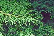 Microbiota lvs