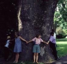 Platanus occidentalis 24 foot trunk (2)