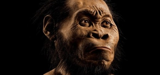 Is this the first human ever? Huge new discovery made in South Africa may change our ancestry and history of our evolution