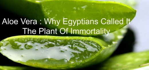 Take a look at Why the Miraculous Aloe Vera is Known As 'The Plant of Immortality'