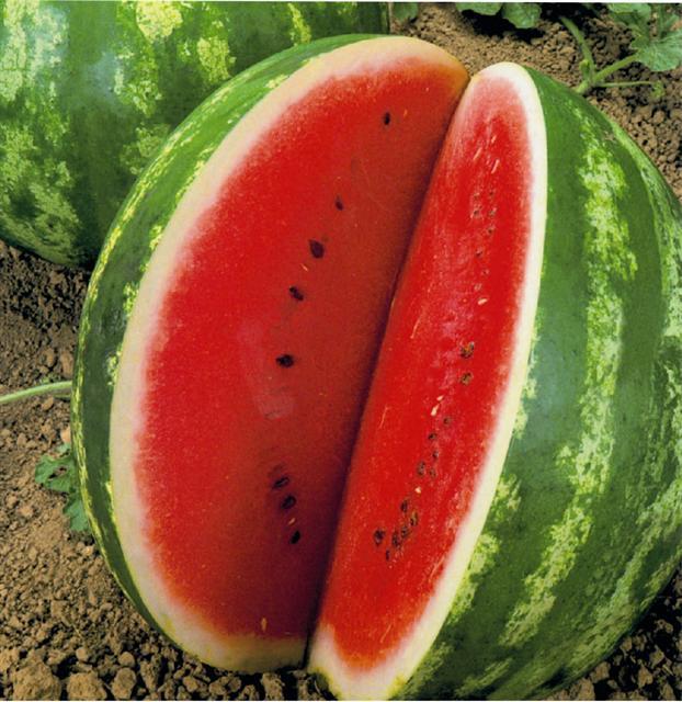 Water melon size