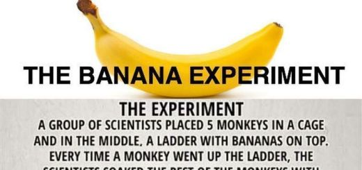 This amazing social experiment teaches us a huge lesson of life by simply using monkeys and a banana