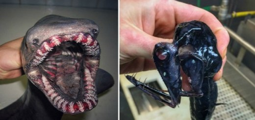 The strange and mysterious fish this fisherman catches in his nets will shock you