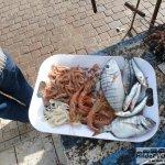 Fisch satt am Hafen von Essaouria