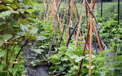 Planning a Garden   Why it's the most important step of the growing season.