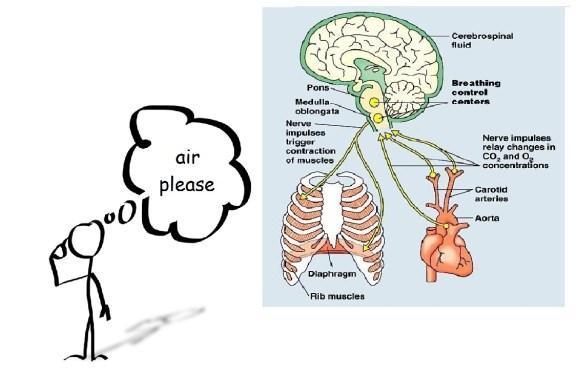 brain breath