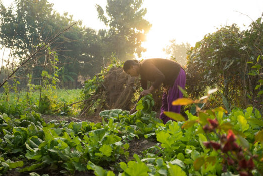 November 19, 2013 - Binauna village, Banke (Nepal). Jharana Kumari Tharu collects vegetable in the family's garden. Jharana is a 23-year-old female community health volunteer in Binauna village, in Nepal's Banke District. As part of her training, she councils expectant mothers and their families on how to properly care for an infant's umbilical cord after birth, which includes applying a chlorahexidine antiseptic gel on the stump. This simple life-saving intervention, which is supported by USAID and partner JSI throughout Nepal, has been shown to reduce infant mortality by roughly one third.