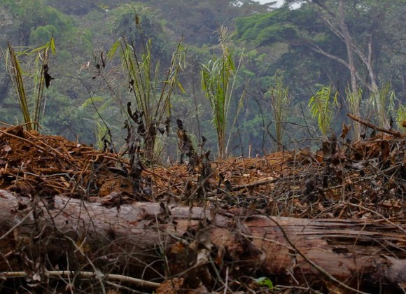 Deforestation in the Democratic Republic of the Congo