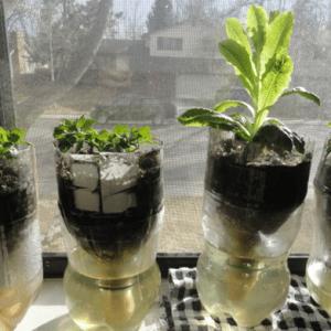 Gardening indoors not as hard as it seems