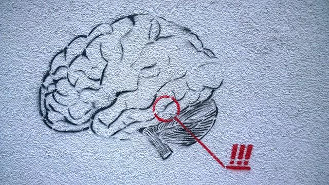 image du cerveau