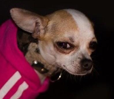 image d'un chien qui regarde en coin