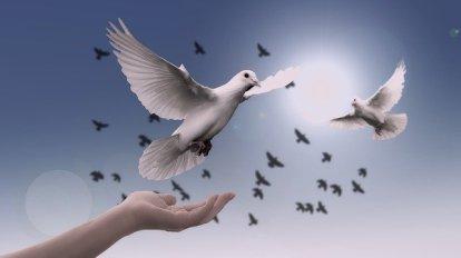 Image symbole d'un oiseau que l'on libére