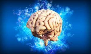 Image du cerveau d'où viennent nos décisions