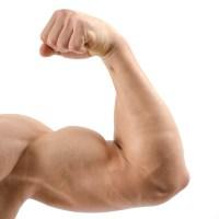 Exercices pour se Muscler les BICEPS : Sans matériel