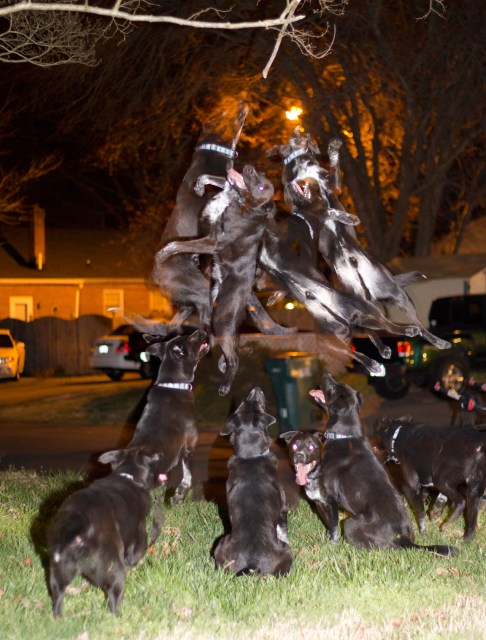 charlie massie dogs