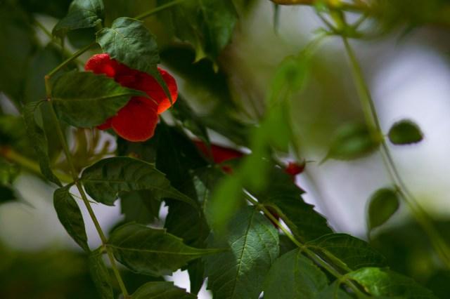 flower hidden shy guy