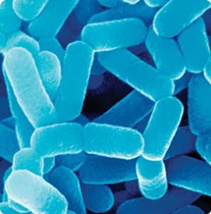 Endossimbiose famosa dos lactobacilos do leite fermentado que auxiliam na digestão Fonte: http://www.yakult.com.mx/que-es-el-lactobacillus-casei-shirota-lcs/